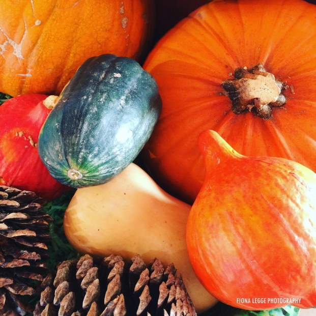 autumn_gourds