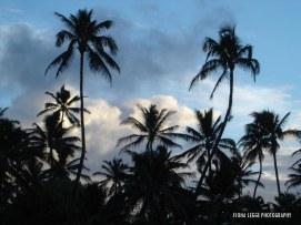 hawaii_palmtrees