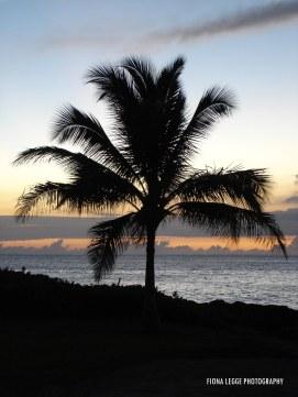 hawaii_trees