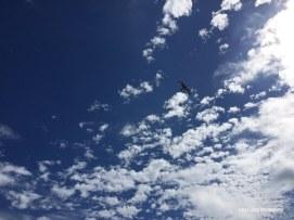 solo_bird_sky