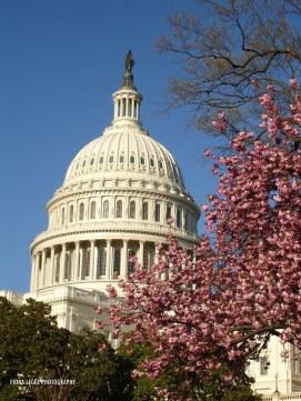 washington_dc_capitol_building