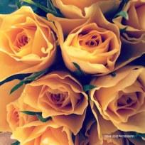 yellow_roses