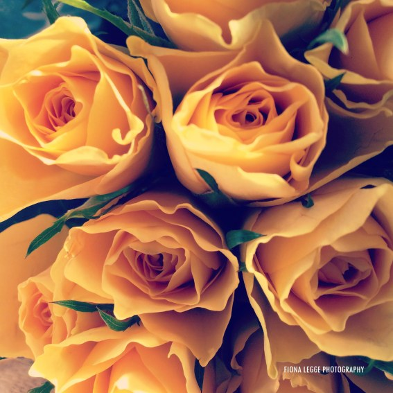 yellow_roses